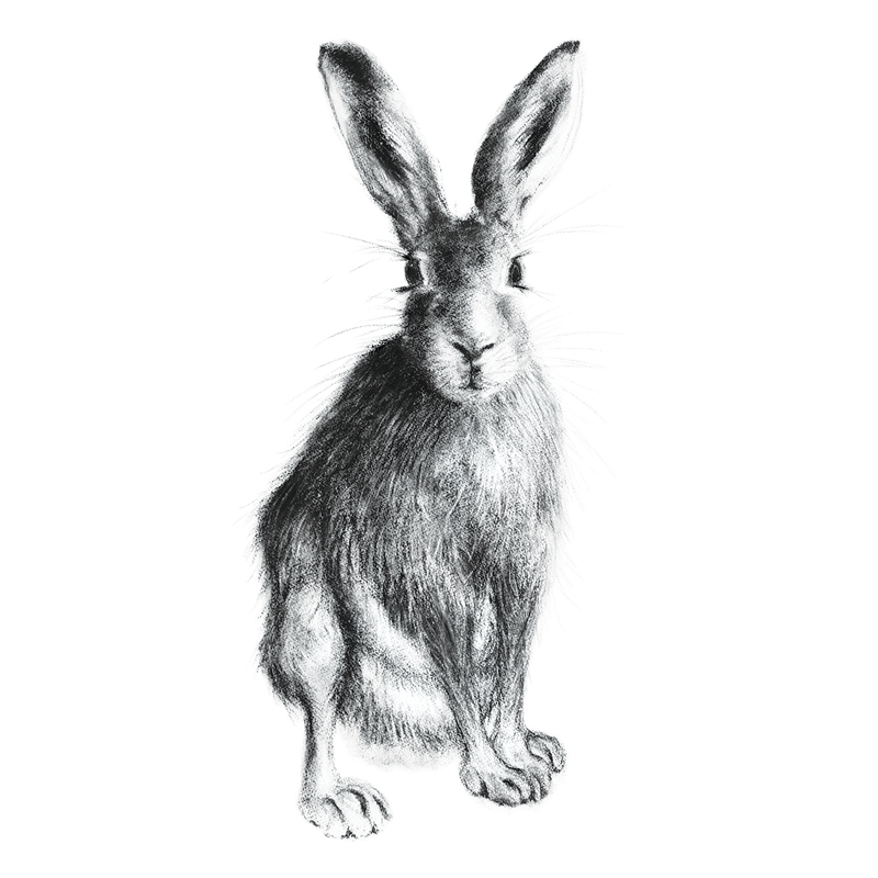 Hare 21Hare 21, A5 Card, Box of hares