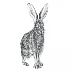 Hare 3
