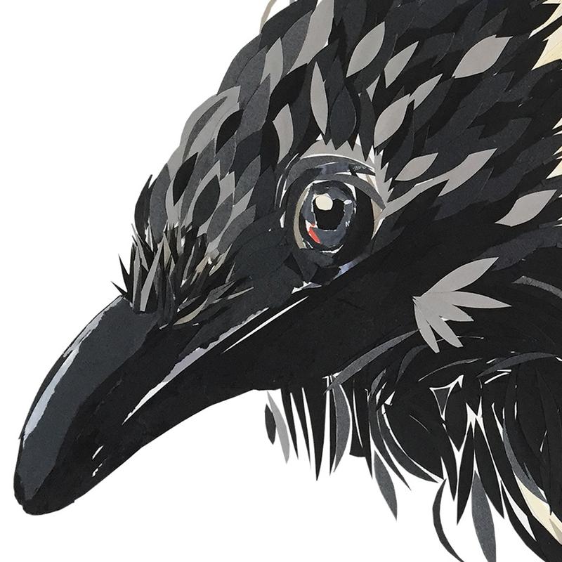 Hooded crow, Original art