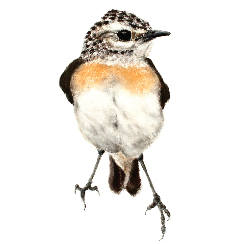 whinchat, box of birds