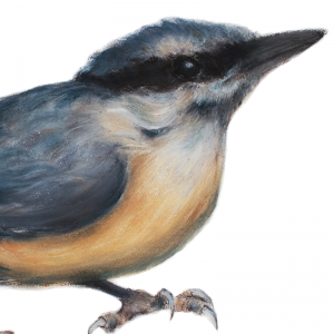 Nuthatch original art
