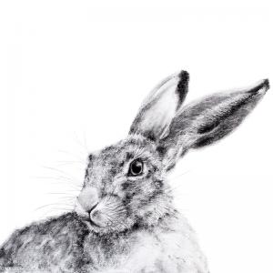 Hare 22