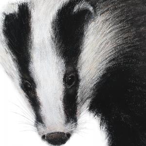Badger 5