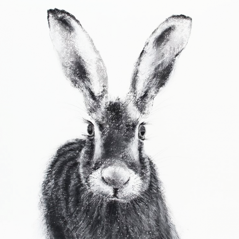 Drawing of Scottish Hare from Tiree