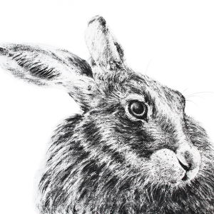 Hare 24
