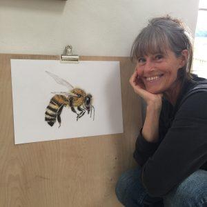 Honey Bee 1- the bee drawing series