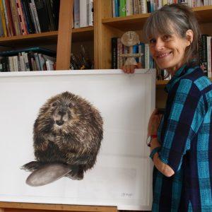 Beaver – the rewilding hero