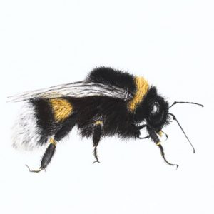 Bumblebee 2 – for sale at The Darryl Nantais Gallery