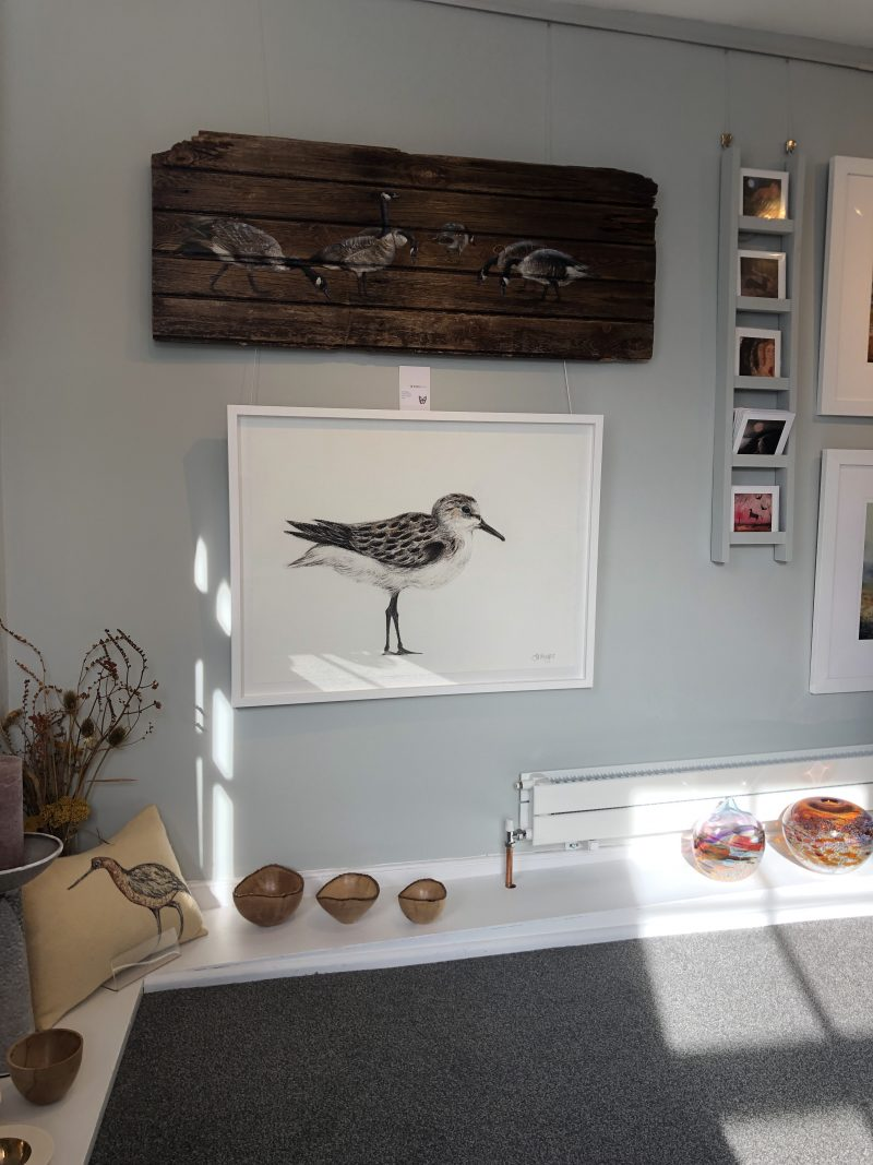 Sanderling drawing at Ashburn Gallery