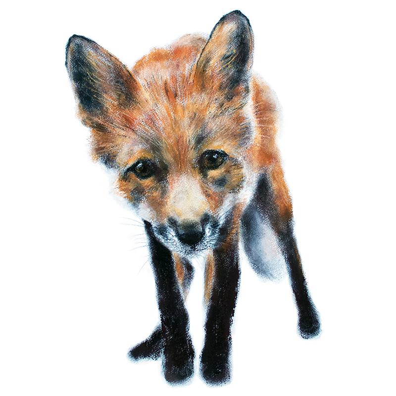 Fox cub 2