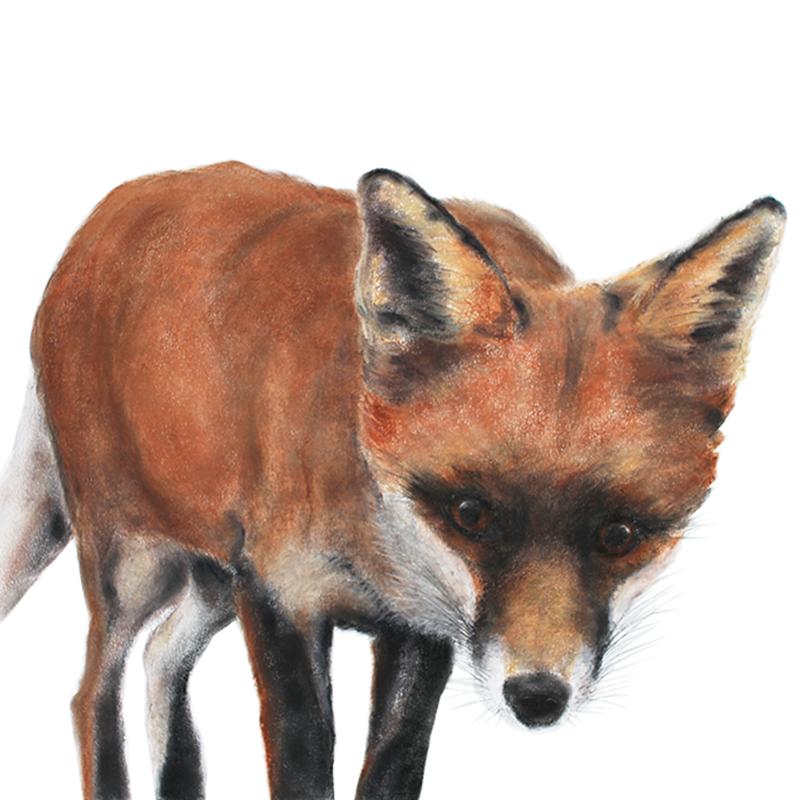 Jill Meager artist. Fox cub 3 Pastel drawing