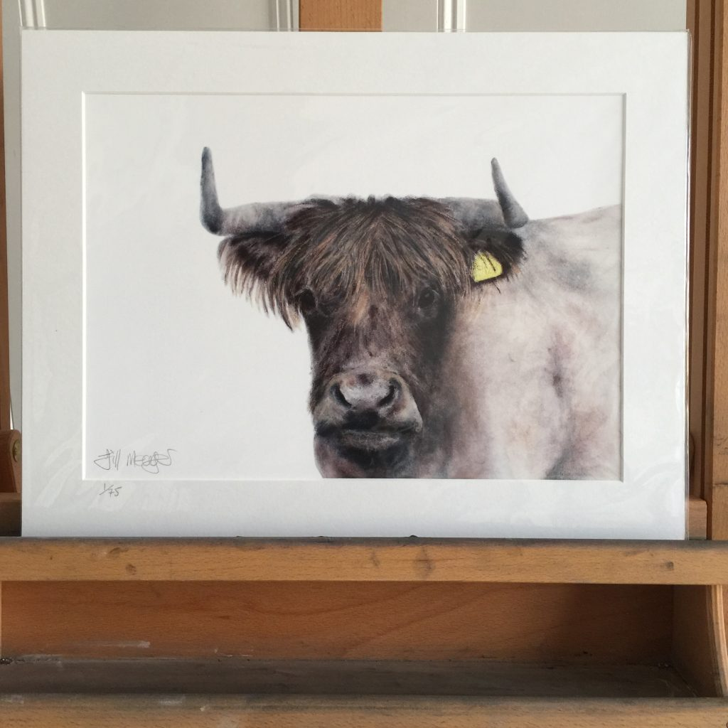 Highland cow drawing print