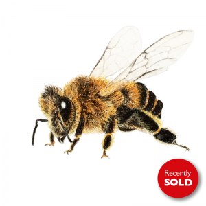 Honey Bee 2 for sale at The Ashburn Gallery