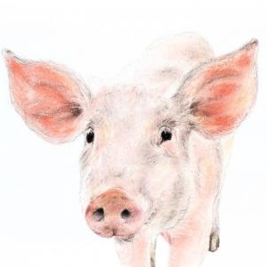 Piglet Jill Meager