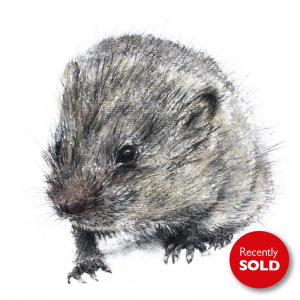 The small shy Dormouse – small drawing series.