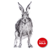 Hare 23 sold