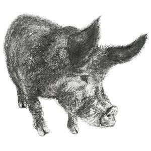 Gunda the pig