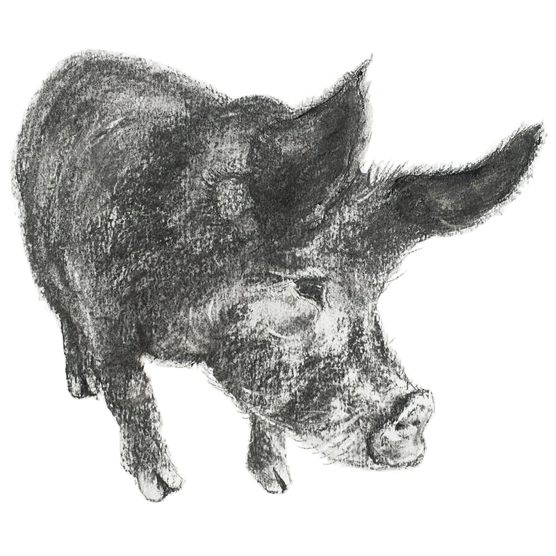 Pig Jill Meager Pastel
