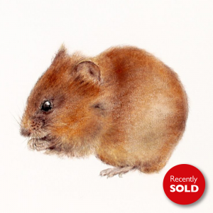 Woodmouse – small drawing series