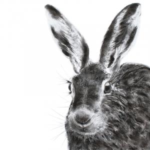 Hare 26