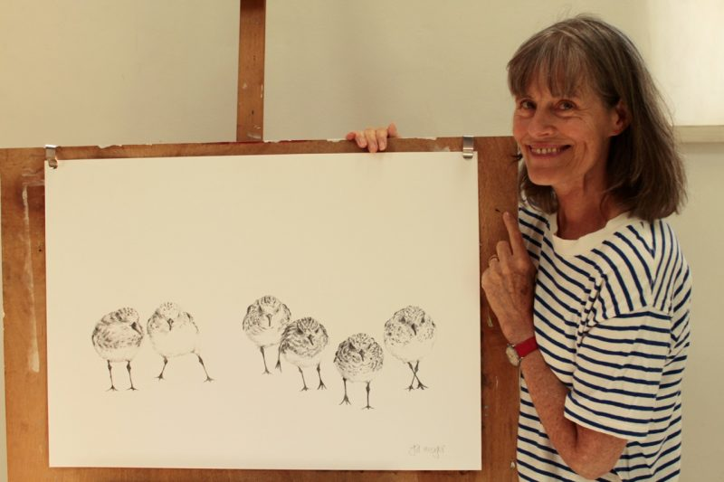 Sanderlings. Jill Meager