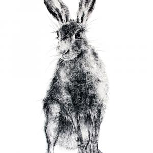 Hare 27