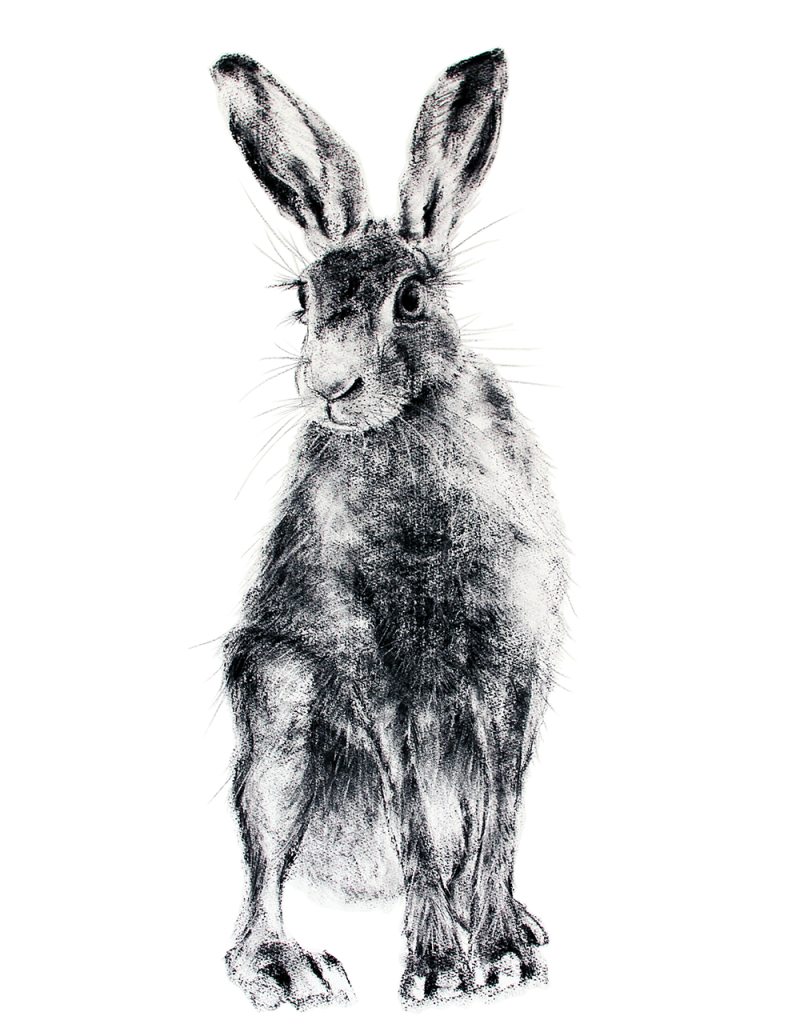 Hare 27 Jill Meager